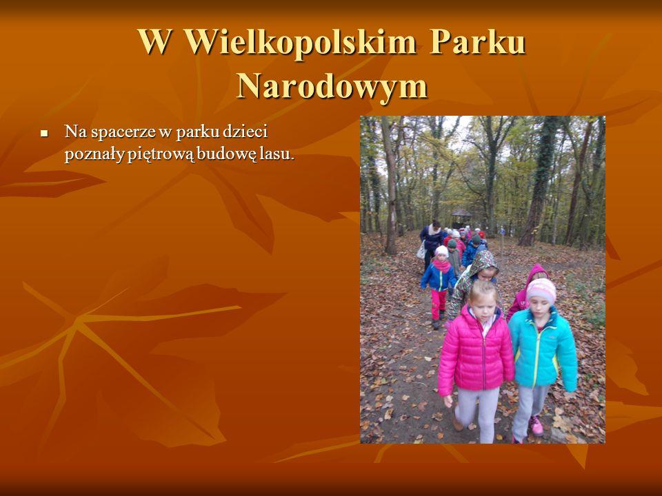 W Wielkopolskim Parku Narodowym Na spacerze w parku dzieci poznały piętrową budowę lasu. Na spacerze w parku dzieci poznały piętrową budowę lasu.