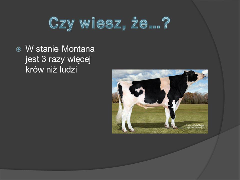  W stanie Montana jest 3 razy więcej krów niż ludzi