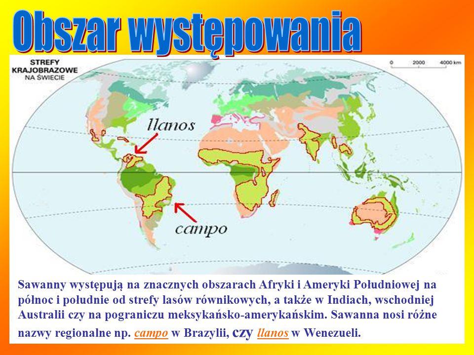 Sawanny występują na znacznych obszarach Afryki i Ameryki Południowej na północ i południe od strefy lasów równikowych, a także w Indiach, wschodniej