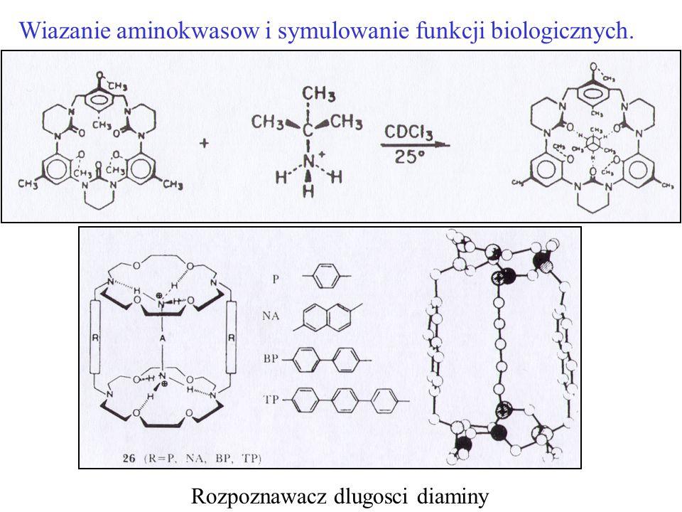 Wiazanie aminokwasow i symulowanie funkcji biologicznych. Rozpoznawacz dlugosci diaminy