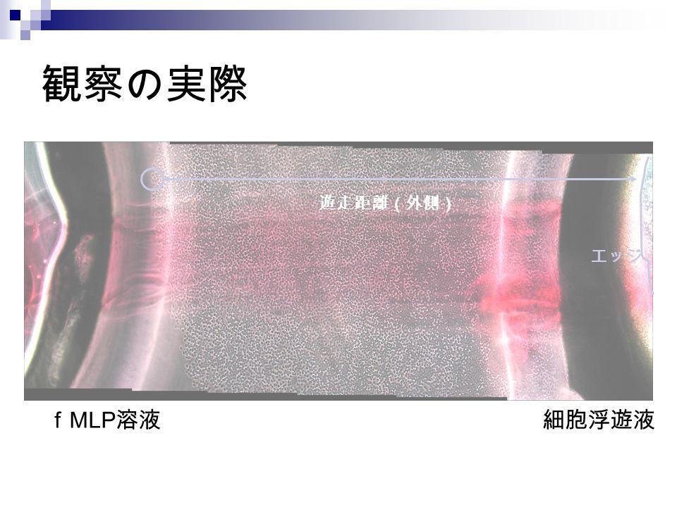 観察の実際 f MLP 溶液細胞浮遊液 遊走距離(外側) エッジ