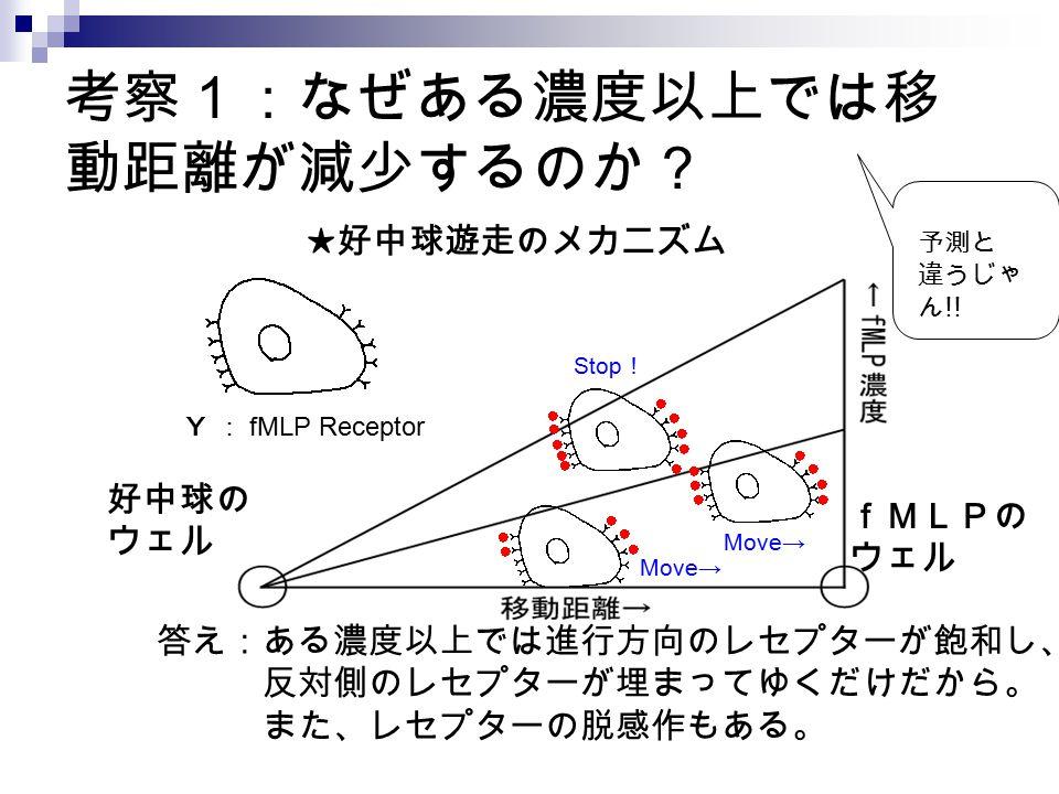 考察1:なぜある濃度以上では移 動距離が減少するのか? Y : fMLP Receptor Move→ Stop ! 好中球の ウェル fMLPの ウェル ★好中球遊走のメカニズム 答え:ある濃度以上では進行方向のレセプターが飽和し、 反対側のレセプターが埋まってゆくだけだから。 また、レセプターの