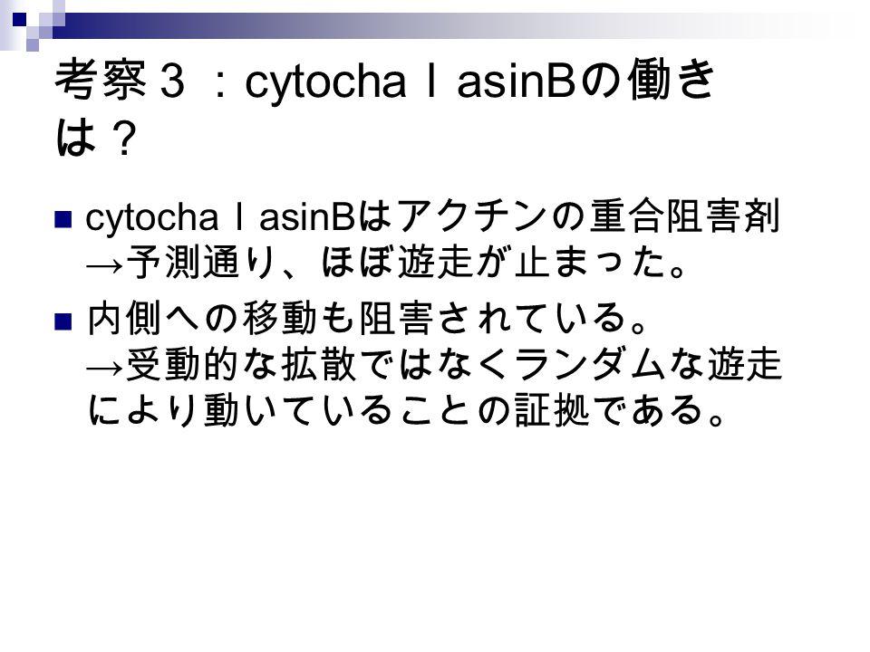 考察3: cytocha l asinB の働き は? cytocha l asinB はアクチンの重合阻害剤 → 予測通り、ほぼ遊走が止まった。 内側への移動も阻害されている。 → 受動的な拡散ではなくランダムな遊走 により動いていることの証拠である。