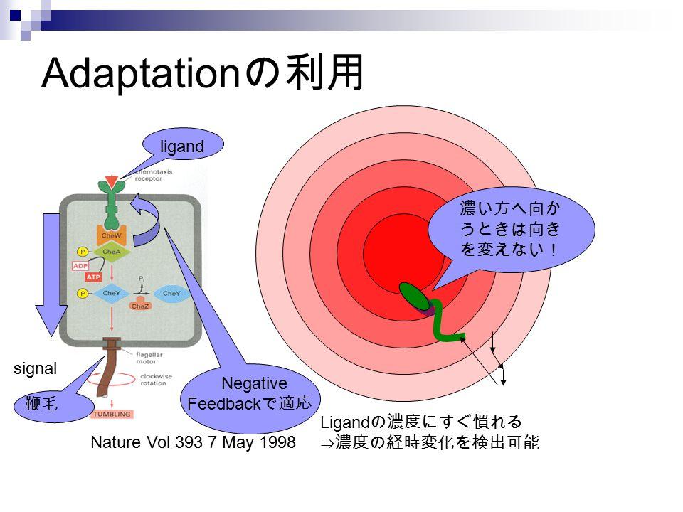 Adaptation の利用 濃い方へ向か うときは向き を変えない! Nature Vol 393 7 May 1998 Ligand の濃度にすぐ慣れる ⇒濃度の経時変化を検出可能 ligand signal Negative Feedback で適応 鞭毛