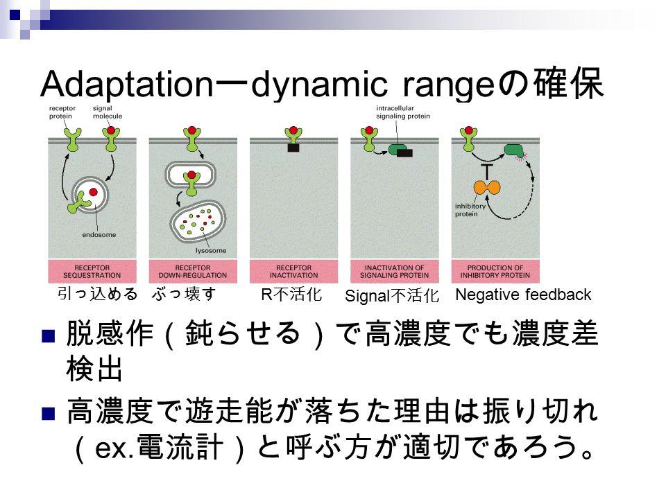 Adaptation ー dynamic range の確保 脱感作(鈍らせる)で高濃度でも濃度差 検出 高濃度で遊走能が落ちた理由は振り切れ ( ex. 電流計)と呼ぶ方が適切であろう。 引っ込めるぶっ壊す R 不活化 Signal 不活化 Negative feedback