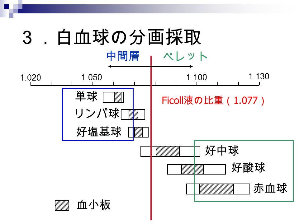 3.白血球の分画採取 Ficoll 液の比重( 1.077 ) 中間層 ペレット 単球 リンパ球 好塩基球 好中球 好酸球 赤血球 1.020 1.0501.100 血小板 1.130
