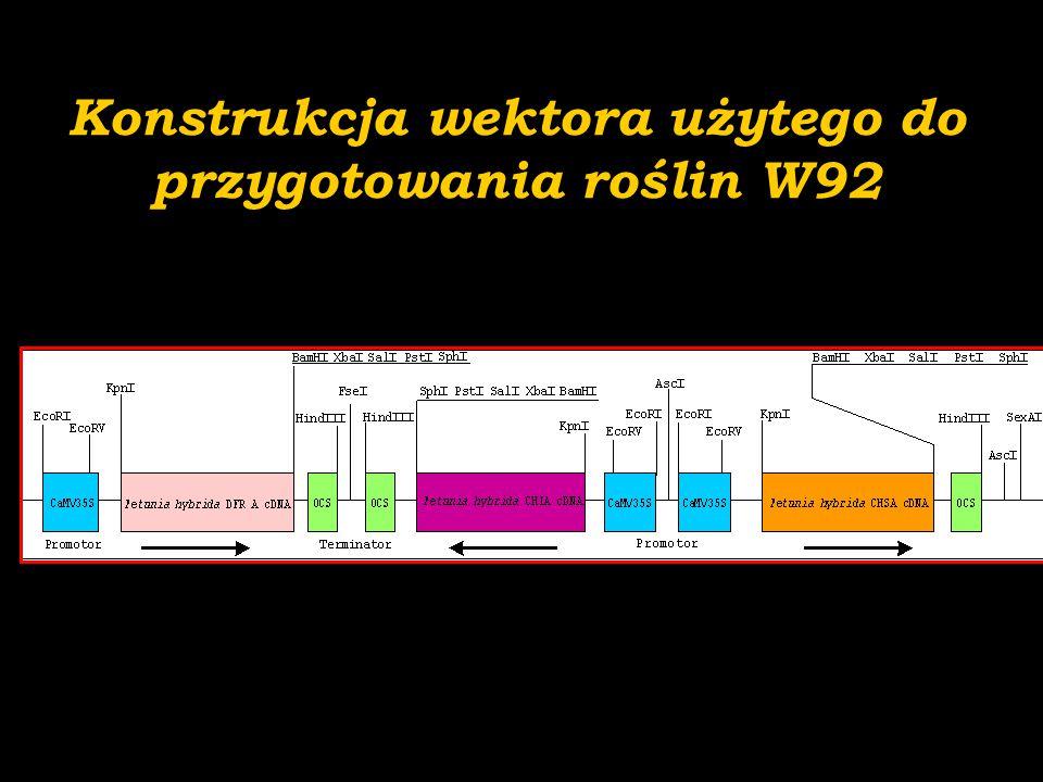 C P 86 68 83 72 70 17 21 28 39 40 13 0,5 kb C 86 68 83 72 70 17 21 28 39 40 1,3 kb 0,8 kb 1,4 kb 23 S C 86 68 83 72 70 17 21 28 39 40 Preselekcja lnu transgenicznego