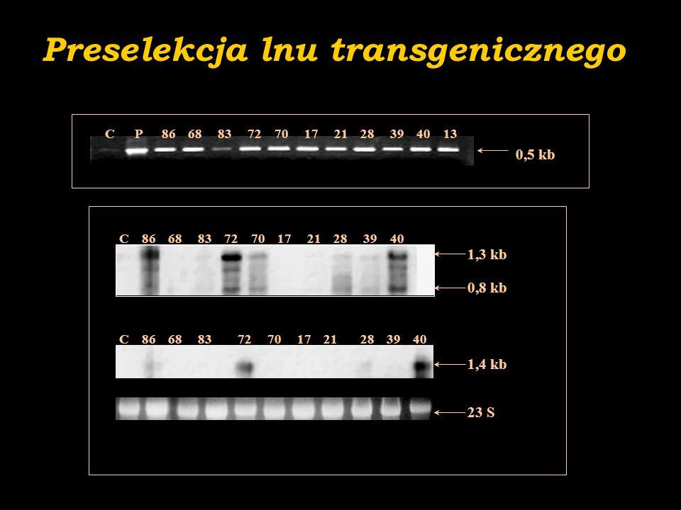 Właściwości antyoksydacyjne lnu- części zielone 5x- 91x 40  70  72  86 mRNA / IC50: -0.77