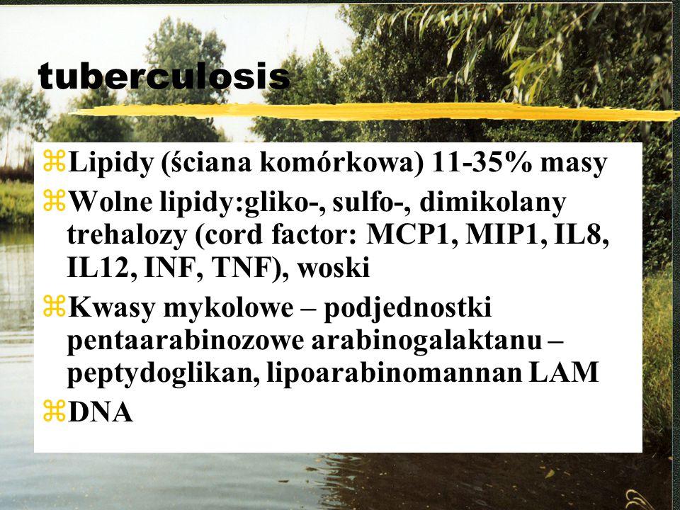 tuberculosis zLipidy (ściana komórkowa) 11-35% masy zWolne lipidy:gliko-, sulfo-, dimikolany trehalozy (cord factor: MCP1, MIP1, IL8, IL12, INF, TNF),