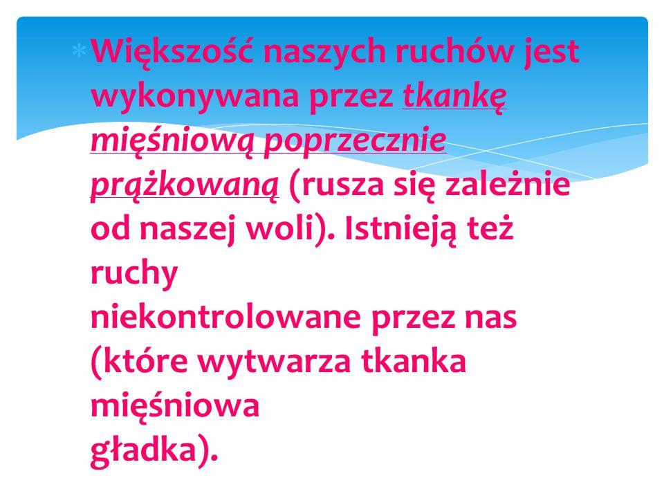 Jesteśmy w Łąkorzu. Pierwsze spotkanie z tragicznym wydarzeniem II wojny światowej.