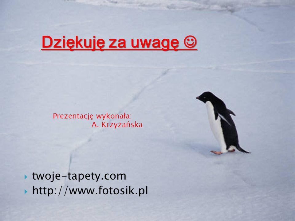  twoje-tapety.com  http://www.fotosik.pl Prezentację wykonała: A. Krzyżańska Dziękuję za uwagę Dziękuję za uwagę