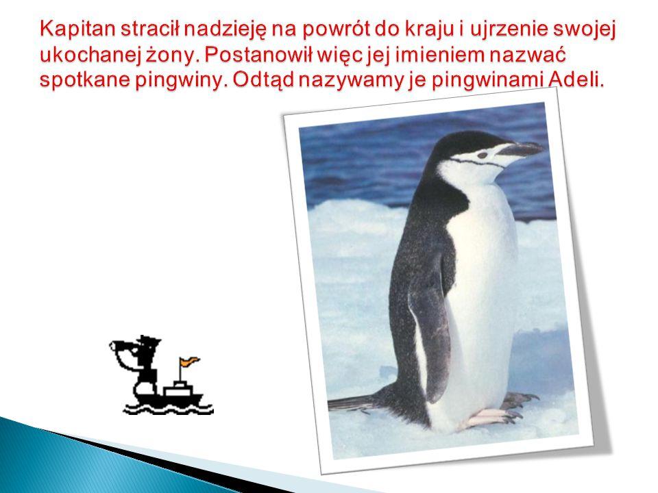 Pingwin cesarski Pingwin królewski Pingwin złotooki Pingwin maskowy Pingwin magellański Pingwin skalny