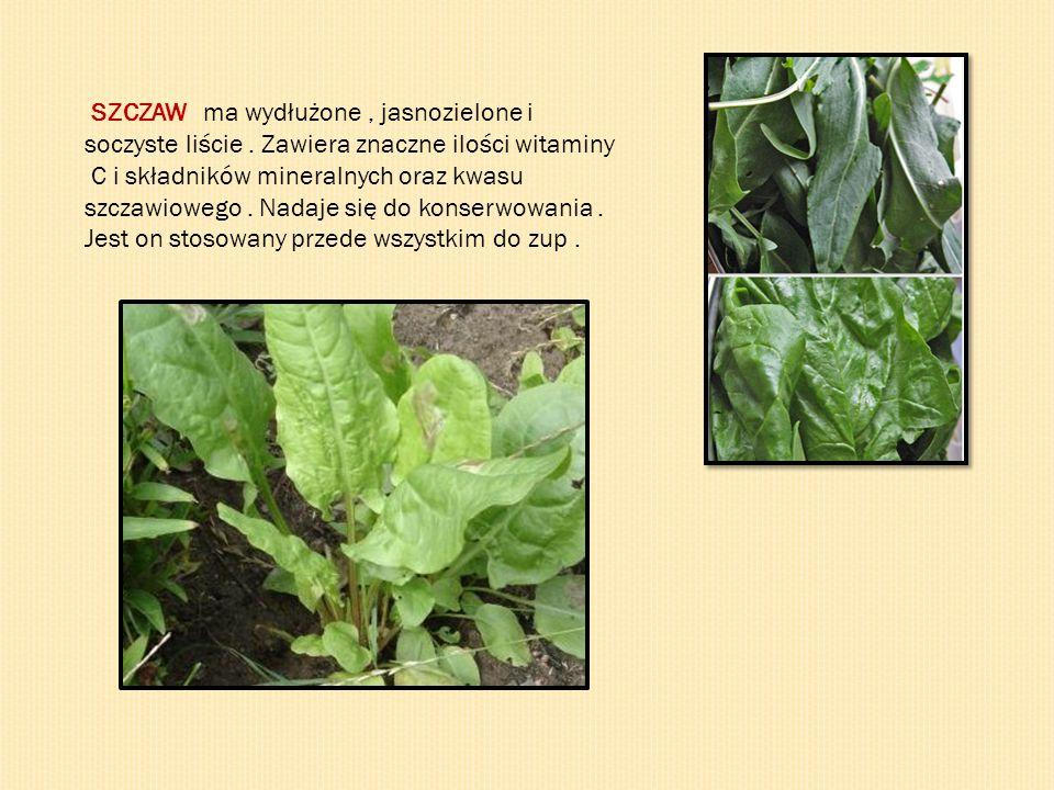 SZCZAW - ma wydłużone, jasnozielone i soczyste liście. Zawiera znaczne ilości witaminy C i składników mineralnych oraz kwasu szczawiowego. Nadaje się