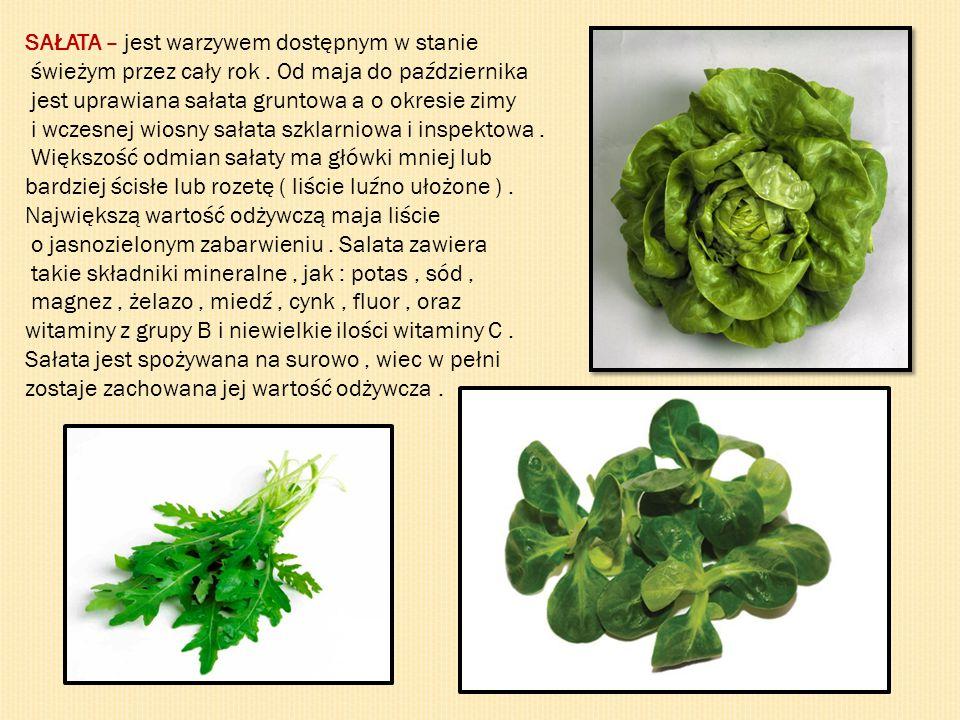 SAŁATA – jest warzywem dostępnym w stanie świeżym przez cały rok. Od maja do października jest uprawiana sałata gruntowa a o okresie zimy i wczesnej w