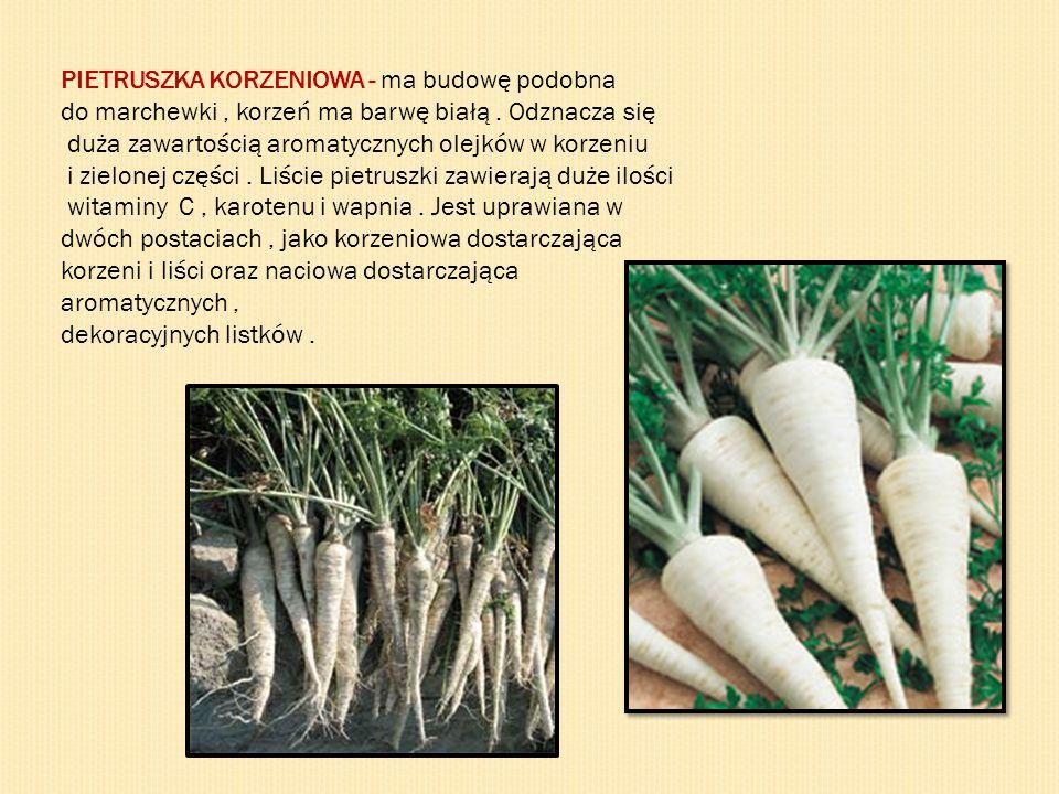 PIETRUSZKA KORZENIOWA - ma budowę podobna do marchewki, korzeń ma barwę białą. Odznacza się duża zawartością aromatycznych olejków w korzeniu i zielon