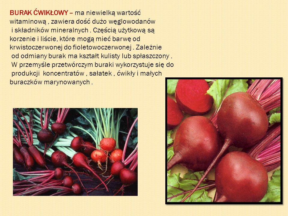 BURAK ĆWIKŁOWY – ma niewielką wartość witaminową, zawiera dość dużo węglowodanów i składników mineralnych. Częścią użytkową są korzenie i liście, któr