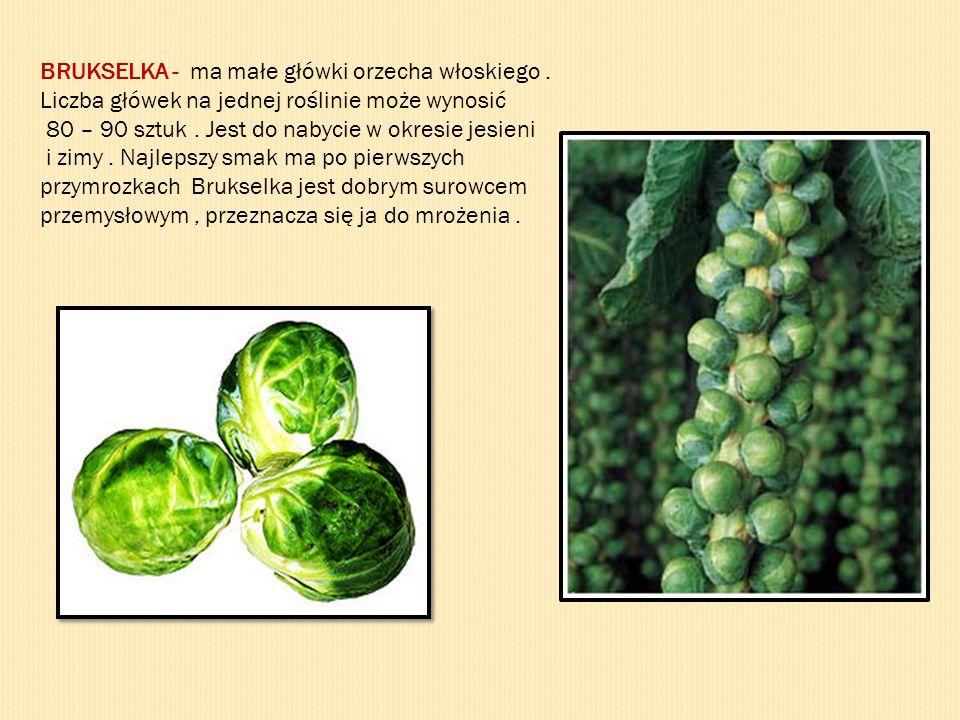 BRUKSELKA - ma małe główki orzecha włoskiego. Liczba główek na jednej roślinie może wynosić 80 – 90 sztuk. Jest do nabycie w okresie jesieni i zimy. N
