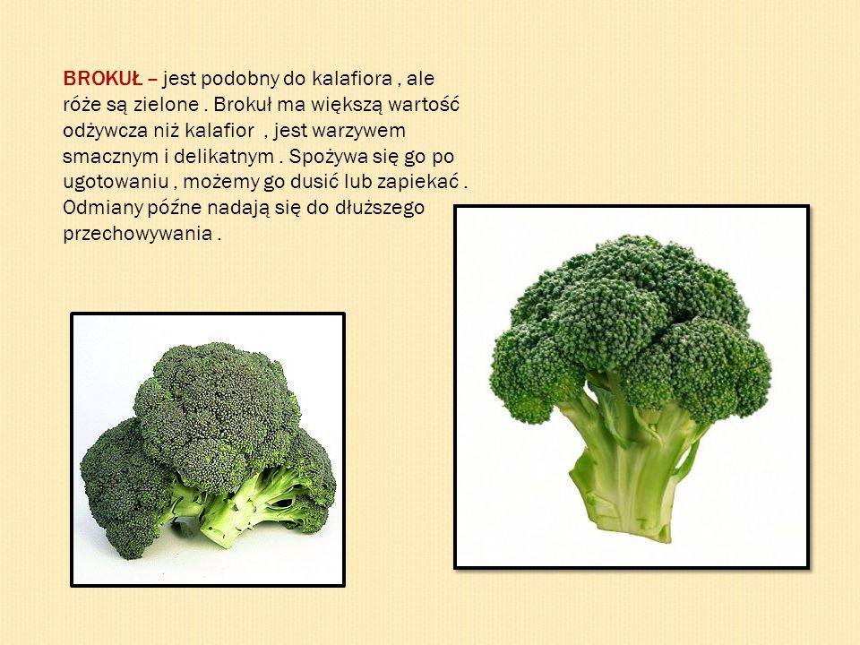 BROKUŁ – jest podobny do kalafiora, ale róże są zielone. Brokuł ma większą wartość odżywcza niż kalafior, jest warzywem smacznym i delikatnym. Spożywa
