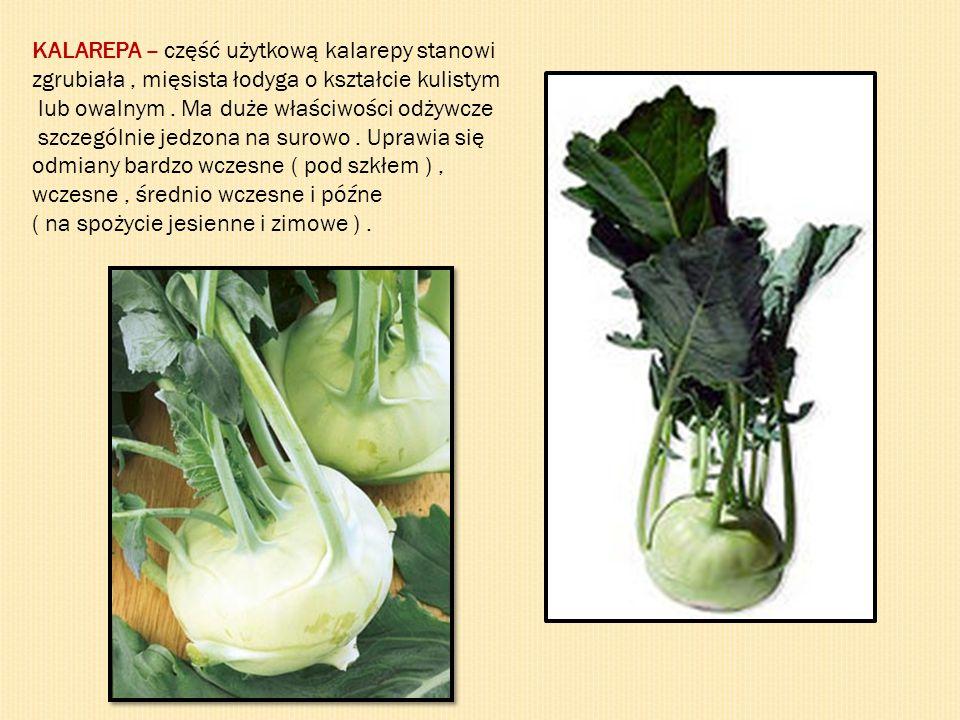 KALAREPA – część użytkową kalarepy stanowi zgrubiała, mięsista łodyga o kształcie kulistym lub owalnym. Ma duże właściwości odżywcze szczególnie jedzo