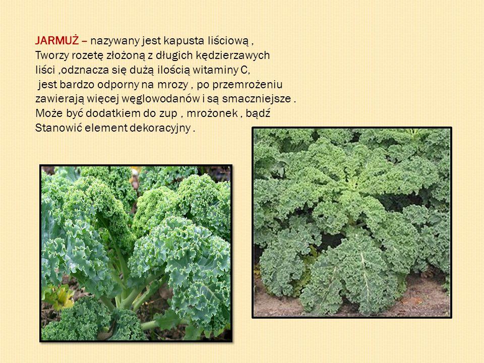 JARMUŻ – nazywany jest kapusta liściową, Tworzy rozetę złożoną z długich kędzierzawych liści,odznacza się dużą ilością witaminy C, jest bardzo odporny na mrozy, po przemrożeniu zawierają więcej węglowodanów i są smaczniejsze.