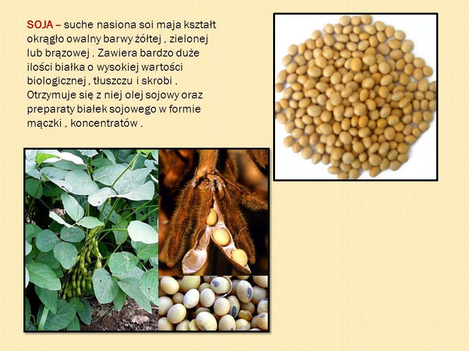 SOJA – suche nasiona soi maja kształt okrągło owalny barwy żółtej, zielonej lub brązowej. Zawiera bardzo duże ilości białka o wysokiej wartości biolog