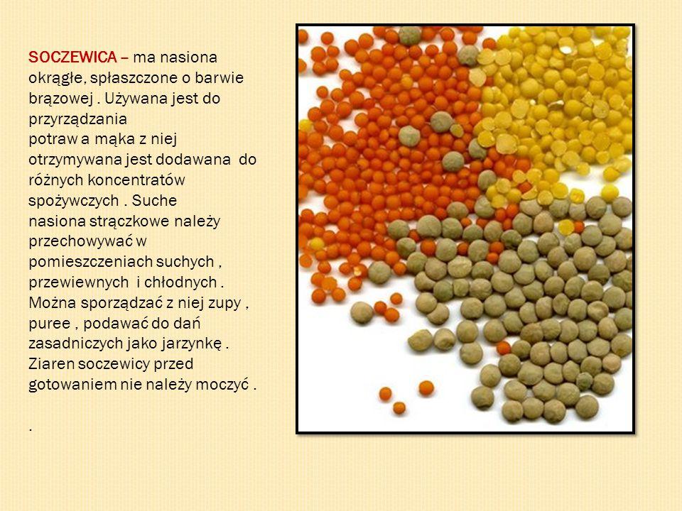 SOCZEWICA – ma nasiona okrągłe, spłaszczone o barwie brązowej. Używana jest do przyrządzania potraw a mąka z niej otrzymywana jest dodawana do różnych