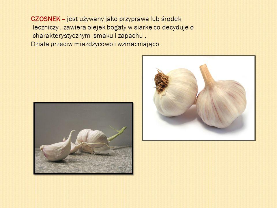 CZOSNEK – jest używany jako przyprawa lub środek leczniczy, zawiera olejek bogaty w siarkę co decyduje o charakterystycznym smaku i zapachu. Działa pr