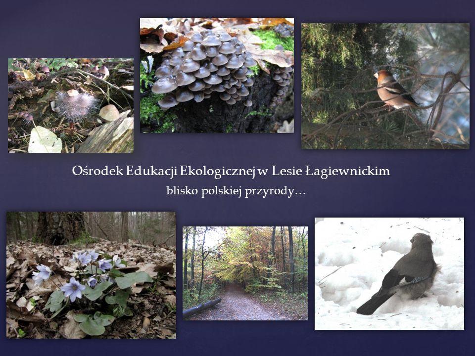Ośrodek Edukacji Ekologicznej w Lesie Łagiewnickim blisko polskiej przyrody…