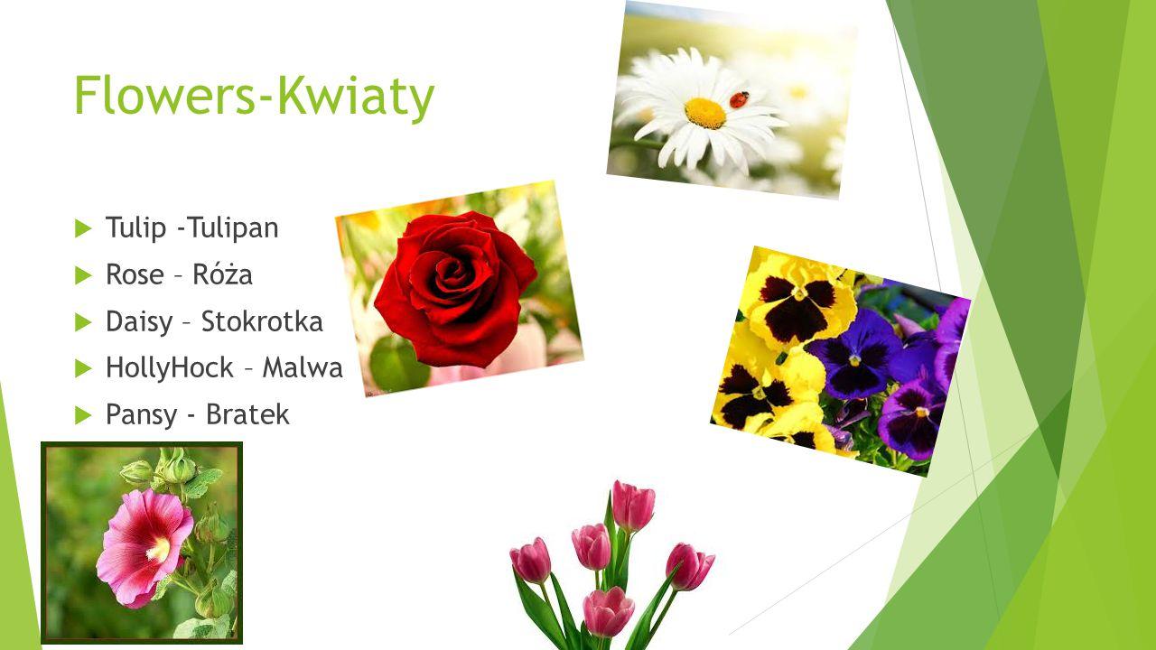 Flowers-Kwiaty  Tulip -Tulipan  Rose – Róża  Daisy – Stokrotka  HollyHock – Malwa  Pansy - Bratek