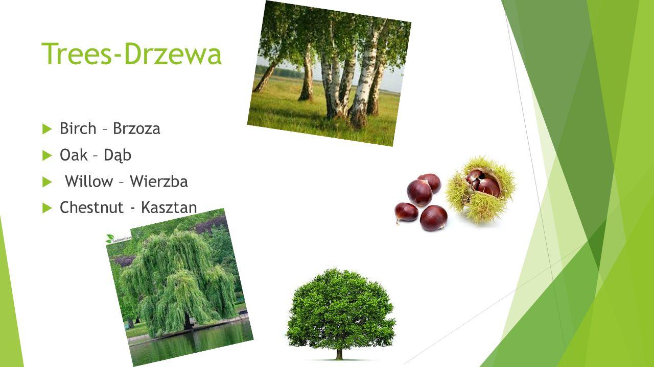 Trees-Drzewa  Birch – Brzoza  Oak – Dąb  Willow – Wierzba  Chestnut - Kasztan