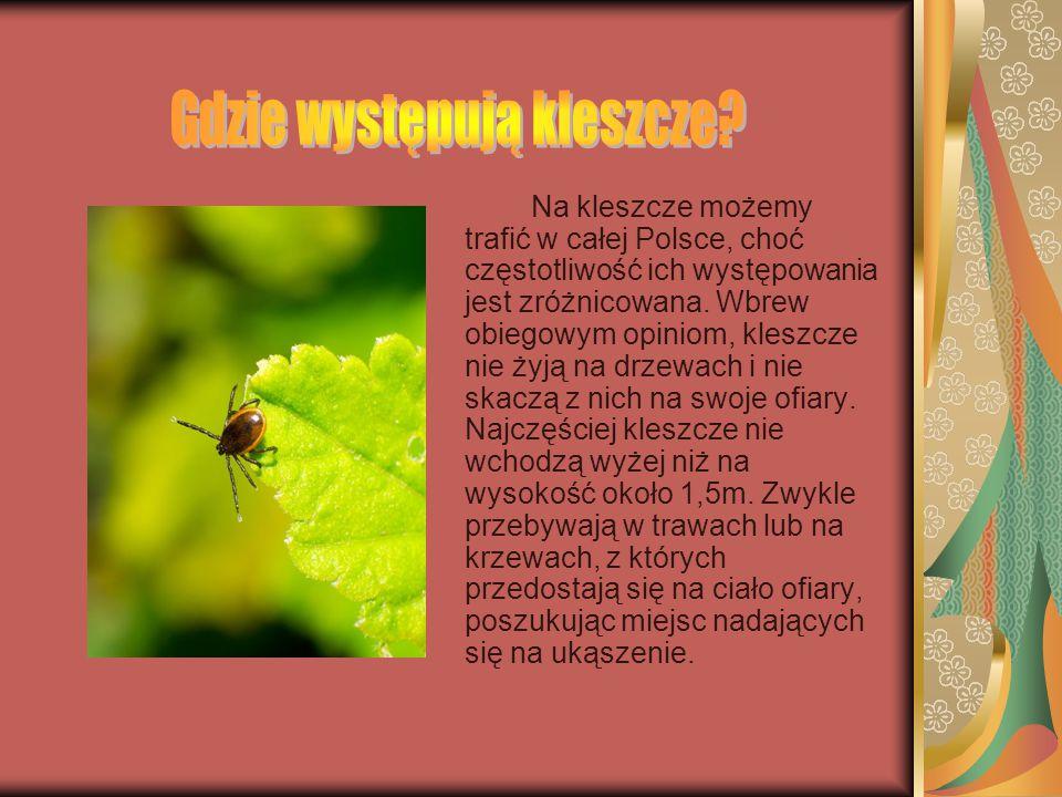 Kleszcze to zwierzęta zaliczane do gromady pajęczaków. Są pasożytami. Na świecie wyróżniamy kilkaset rodzajów kleszczy. W Polsce występuje około 20 ga