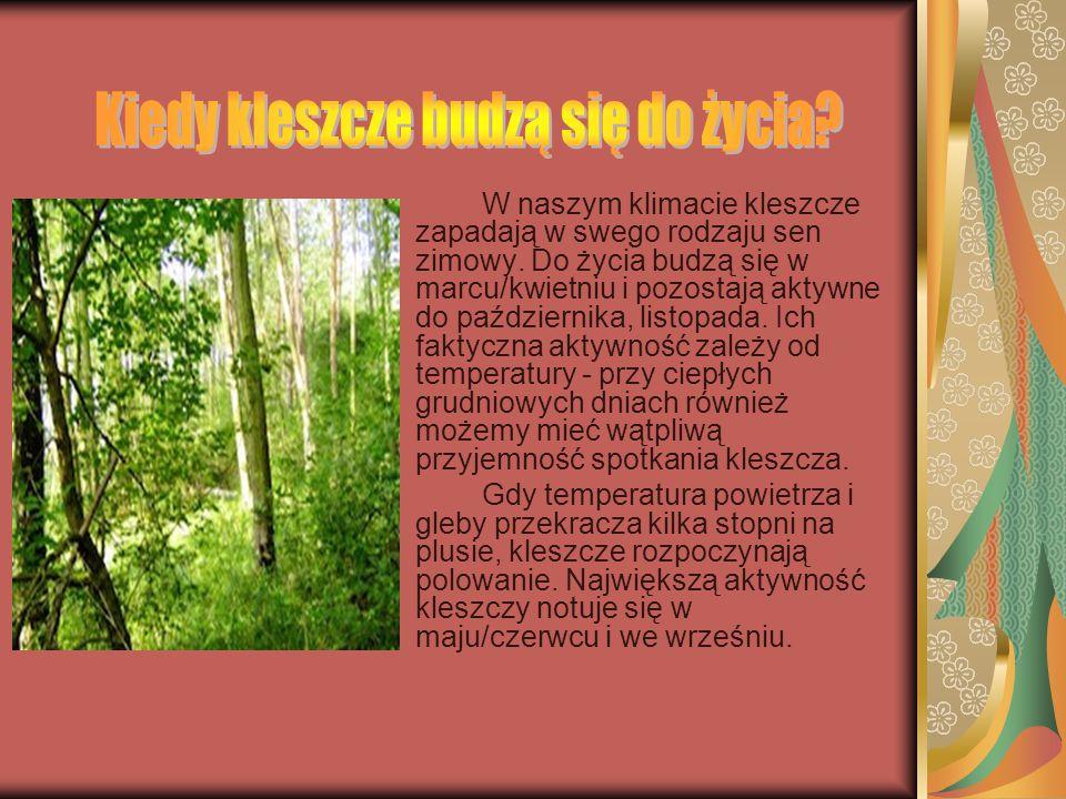 Na kleszcze możemy trafić w całej Polsce, choć częstotliwość ich występowania jest zróżnicowana. Wbrew obiegowym opiniom, kleszcze nie żyją na drzewac