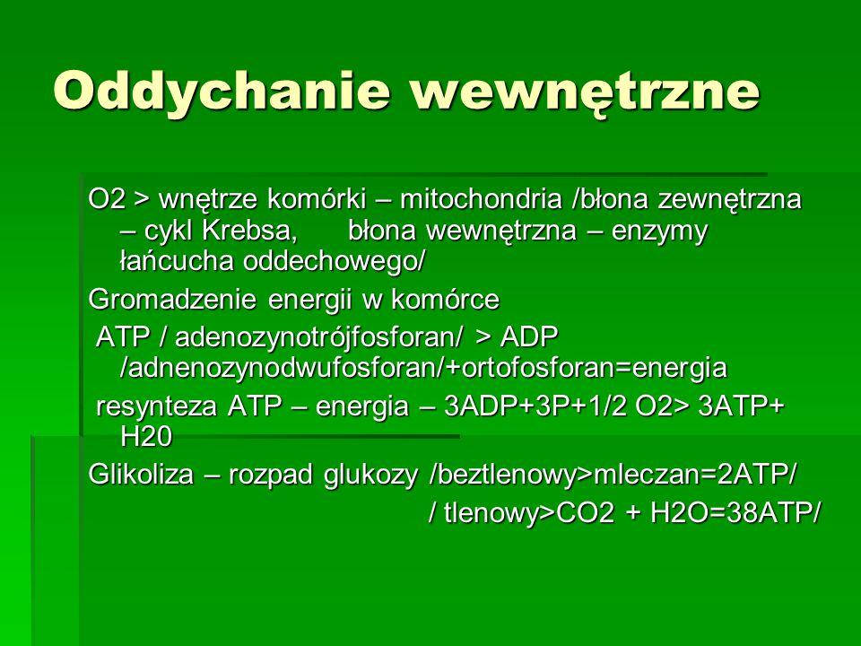 Oddychanie wewnętrzne O2 > wnętrze komórki – mitochondria /błona zewnętrzna – cykl Krebsa, błona wewnętrzna – enzymy łańcucha oddechowego/ Gromadzenie energii w komórce ATP / adenozynotrójfosforan/ > ADP /adnenozynodwufosforan/+ortofosforan=energia ATP / adenozynotrójfosforan/ > ADP /adnenozynodwufosforan/+ortofosforan=energia resynteza ATP – energia – 3ADP+3P+1/2 O2> 3ATP+ H20 resynteza ATP – energia – 3ADP+3P+1/2 O2> 3ATP+ H20 Glikoliza – rozpad glukozy /beztlenowy>mleczan=2ATP/ / tlenowy>CO2 + H2O=38ATP/ / tlenowy>CO2 + H2O=38ATP/