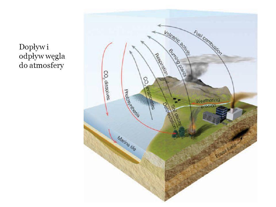 se Atmosfera 700 Gt C Skały osadowe CaCO3 + węgiel organiczny 1 000 000 Gt C Paliwa kopalne 5 000 Gt C Ocean utleniony C 38 000 Gt C Rozpuszczony organiczny 600 Gt C Organizmy żywe 1 Gt C Ląd Organizmy żywe 500 Gt C Węgiel w glebie 1500 Gt C 120 Gt / rok 90 Gt / rok Metamorfizm CaCO3 + SiO2 → CaSiO3 + CO2 <0.1 Gt/rok Wietrzenie CaSiO3 + CO2 → CaCO3 + SiO2 <0.1 Gt/rok