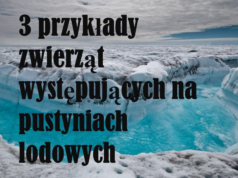 3 przyk ł ady zwierz ą t wyst ę puj ą cych na pustyniach lodowych