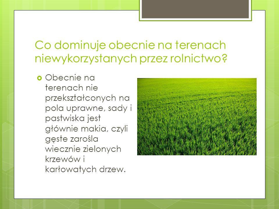 Co dominuje obecnie na terenach niewykorzystanych przez rolnictwo?  Obecnie na terenach nie przekształconych na pola uprawne, sady i pastwiska jest g