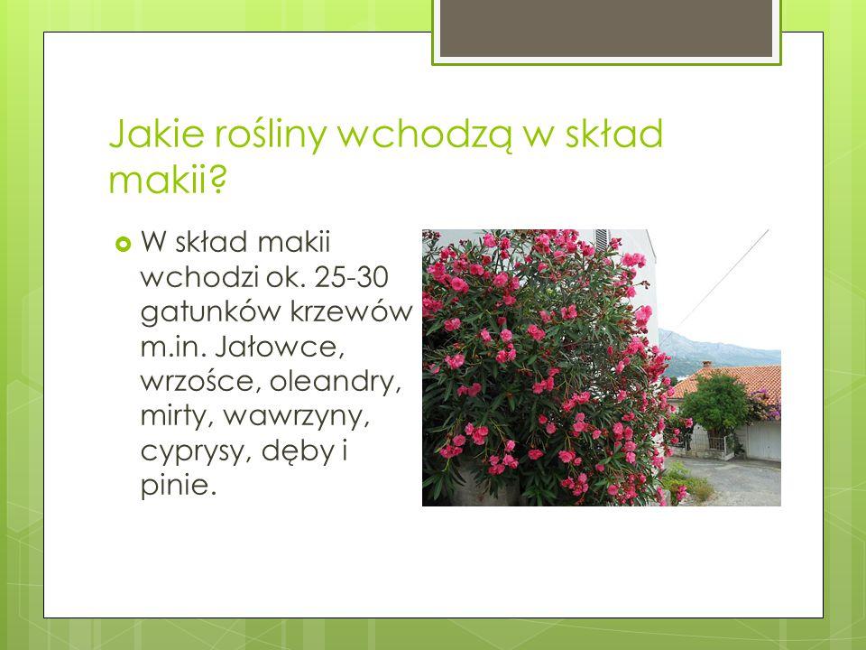 Jakie rośliny wchodzą w skład makii?  W skład makii wchodzi ok. 25-30 gatunków krzewów m.in. Jałowce, wrzośce, oleandry, mirty, wawrzyny, cyprysy, dę