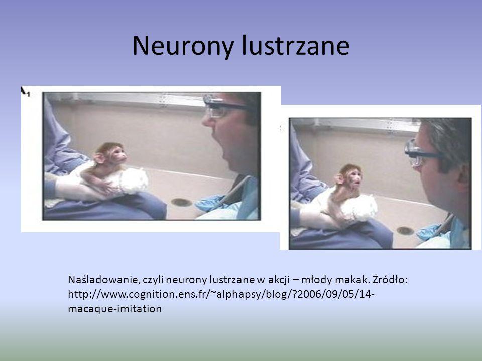 Neurony lustrzane Naśladowanie, czyli neurony lustrzane w akcji – młody makak. Źródło: http://www.cognition.ens.fr/~alphapsy/blog/?2006/09/05/14- maca