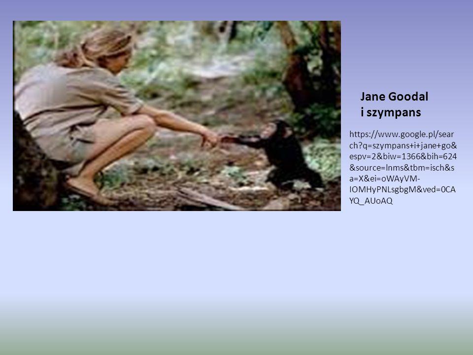 Jane Goodal i szympans https://www.google.pl/sear ch?q=szympans+i+jane+go& espv=2&biw=1366&bih=624 &source=lnms&tbm=isch&s a=X&ei=oWAyVM- IOMHyPNLsgbg