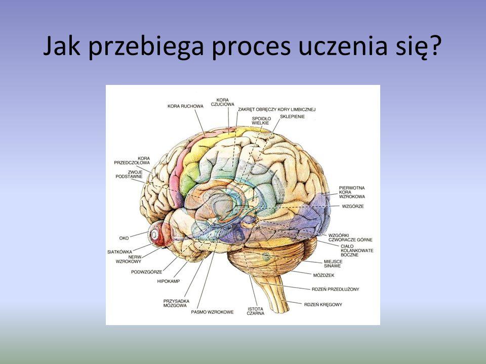 Jak przebiega proces uczenia się?