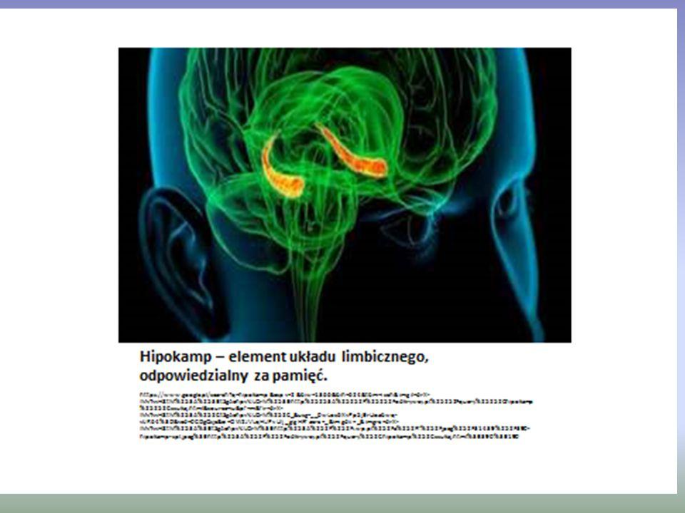 Jest to tworzenie uprzywilejowanych obwodów obiegu informacji i zmiana siły połączeń synaptycznych.