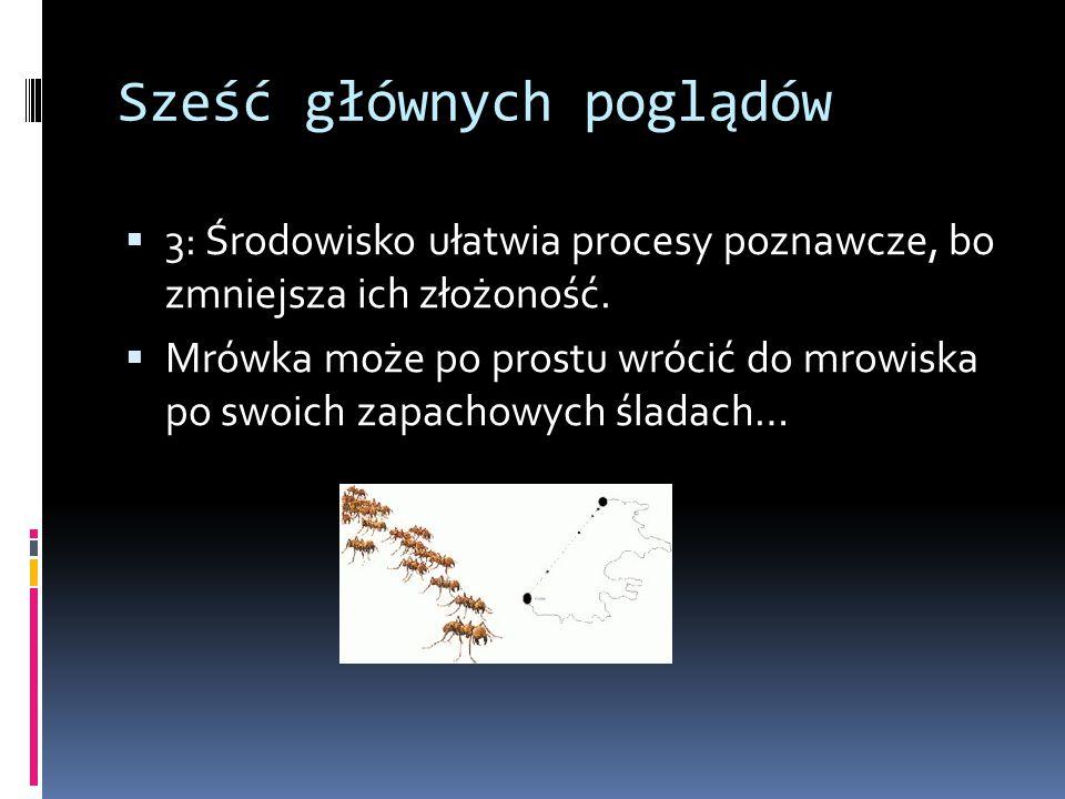 Sześć głównych poglądów  3: Środowisko ułatwia procesy poznawcze, bo zmniejsza ich złożoność.  Mrówka może po prostu wrócić do mrowiska po swoich za