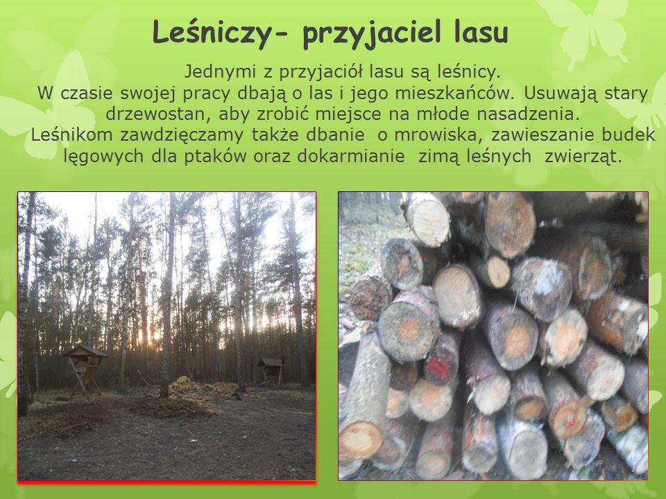 Leśniczy- przyjaciel lasu Jednymi z przyjaciół lasu są leśnicy. W czasie swojej pracy dbają o las i jego mieszkańców. Usuwają stary drzewostan, aby zr