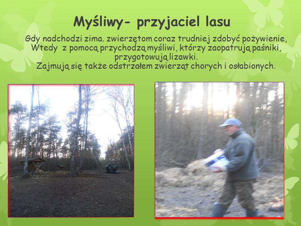 Myśliwy- przyjaciel lasu Gdy nadchodzi zima. zwierzętom coraz trudniej zdobyć pożywienie, Wtedy z pomocą przychodzą myśliwi, którzy zaopatrują paśniki