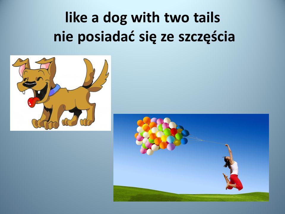 like a dog with two tails nie posiadać się ze szczęścia