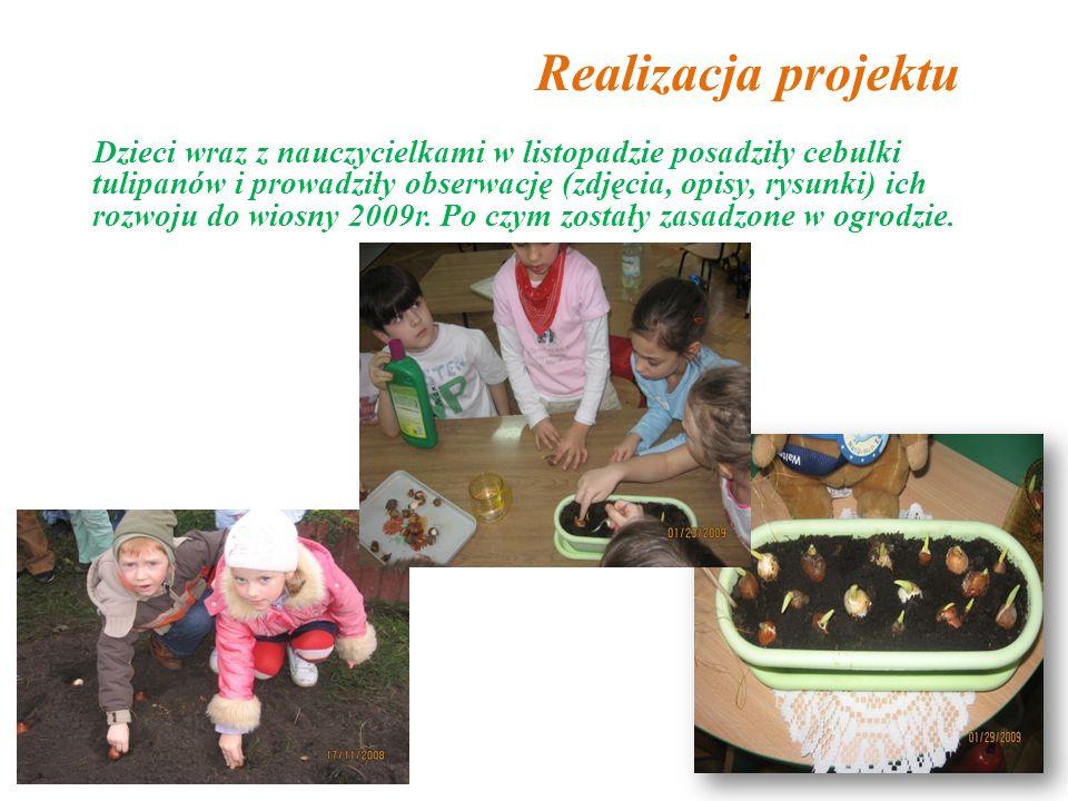 Realizacja projektu Dzieci wraz z nauczycielkami w listopadzie posadziły cebulki tulipanów i prowadziły obserwację (zdjęcia, opisy, rysunki) ich rozwoju do wiosny 2009r.