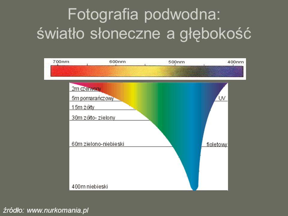 Fotografia podwodna: światło słoneczne a głębokość źródło: www.nurkomania.pl