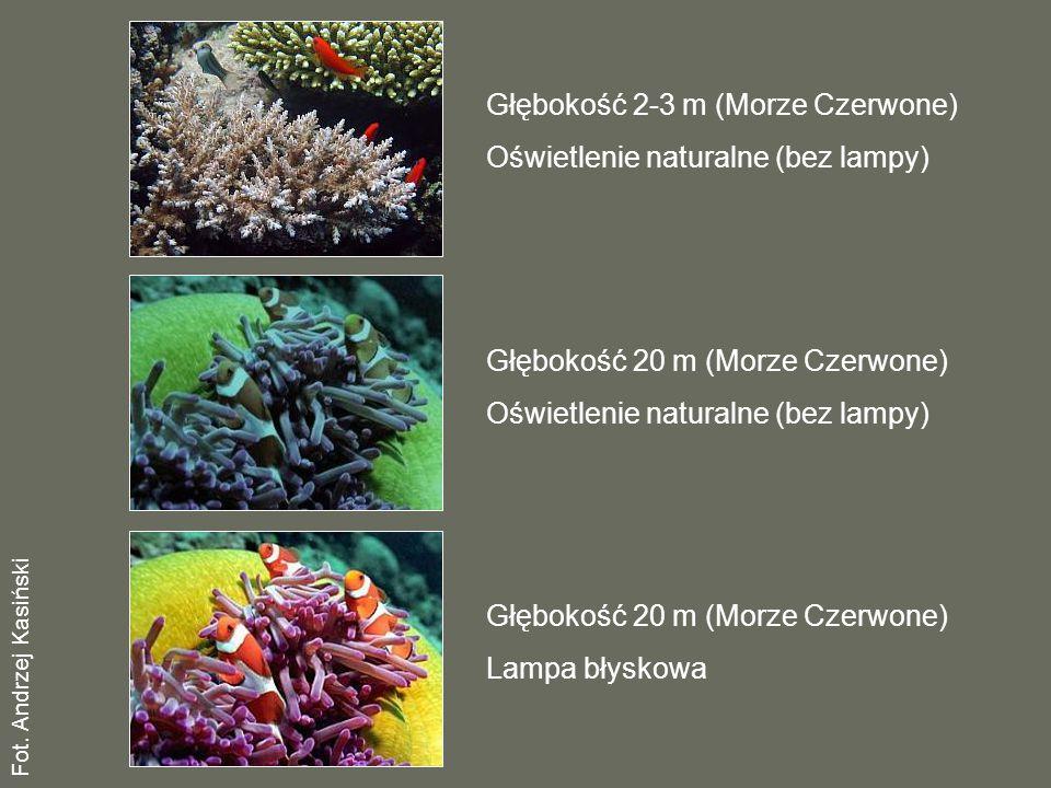 Głębokość 2-3 m (Morze Czerwone) Oświetlenie naturalne (bez lampy) Głębokość 20 m (Morze Czerwone) Oświetlenie naturalne (bez lampy) Głębokość 20 m (Morze Czerwone) Lampa błyskowa Fot.