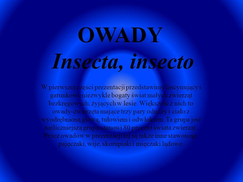 OWADY Insecta, insecto W pierwszej części prezentacji przedstawimy fascynujący i gatunkowo niezwykle bogaty świat małych zwierząt bezkręgowych, żyjący