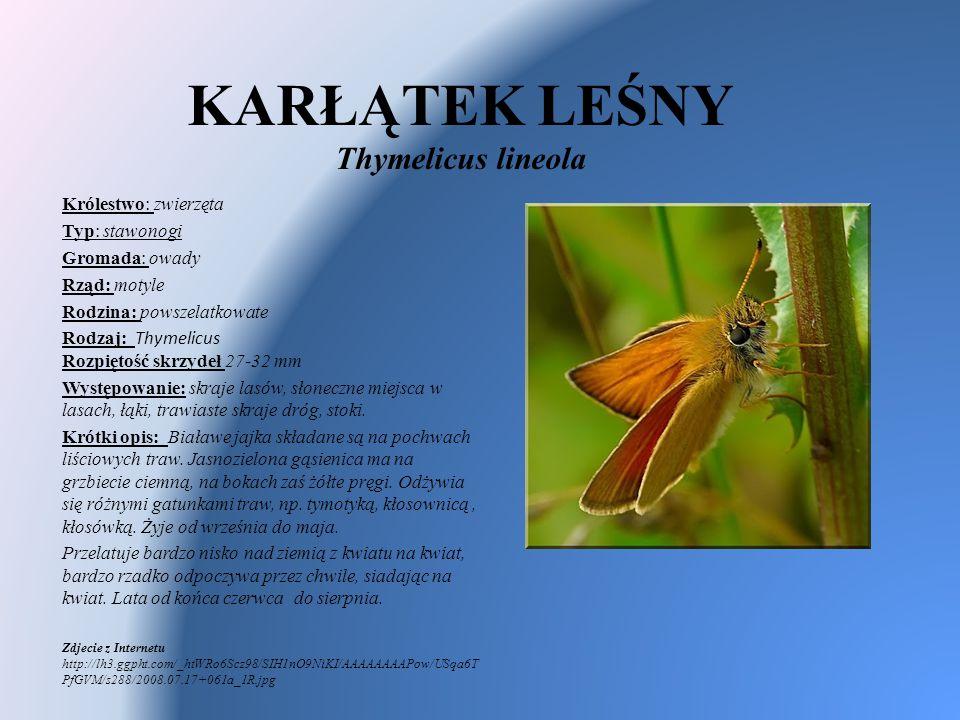 KARŁĄTEK LEŚNY Thymelicus lineola Królestwo: zwierzęta Typ: stawonogi Gromada: owady Rząd: motyle Rodzina: powszelatkowate Rodzaj: Thymelicus Rozpięto